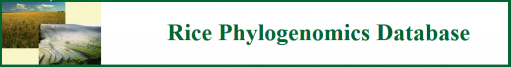 Link to rice phylogenomic databases