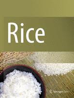 Rice journal logo